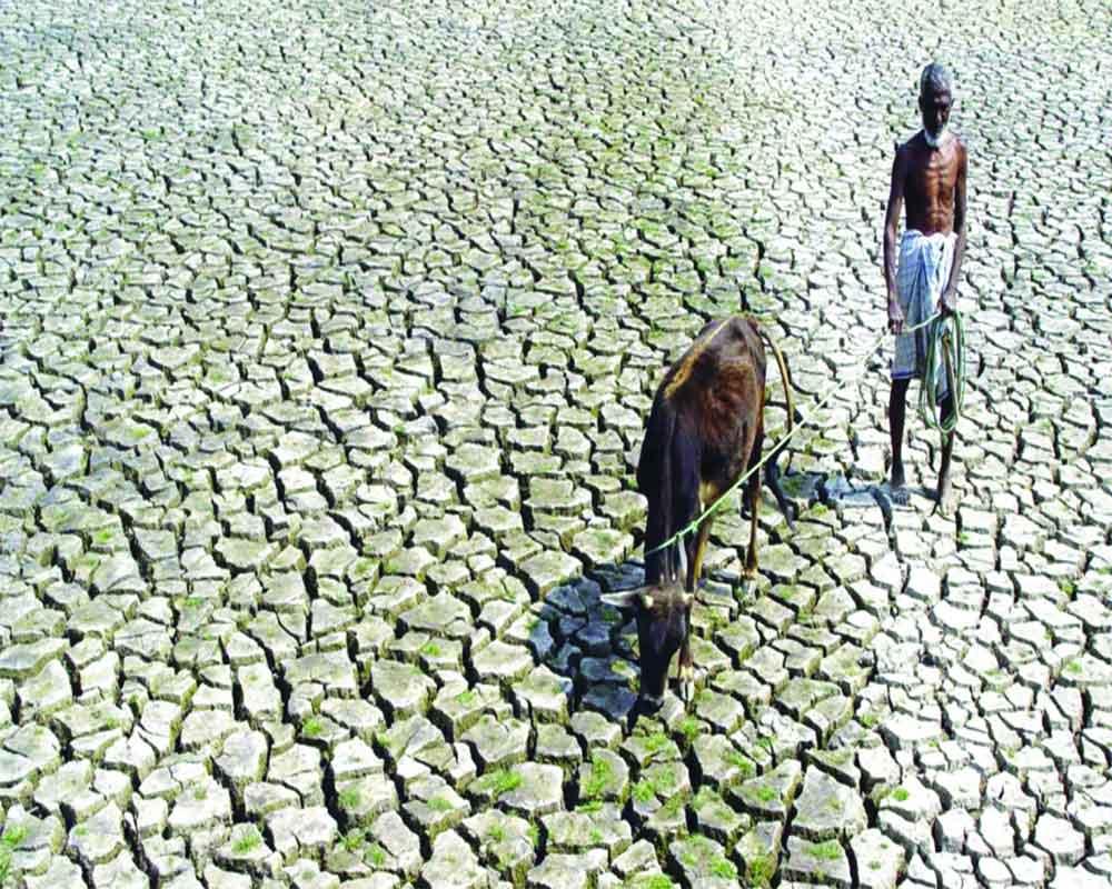 Grow ideas to save farmers