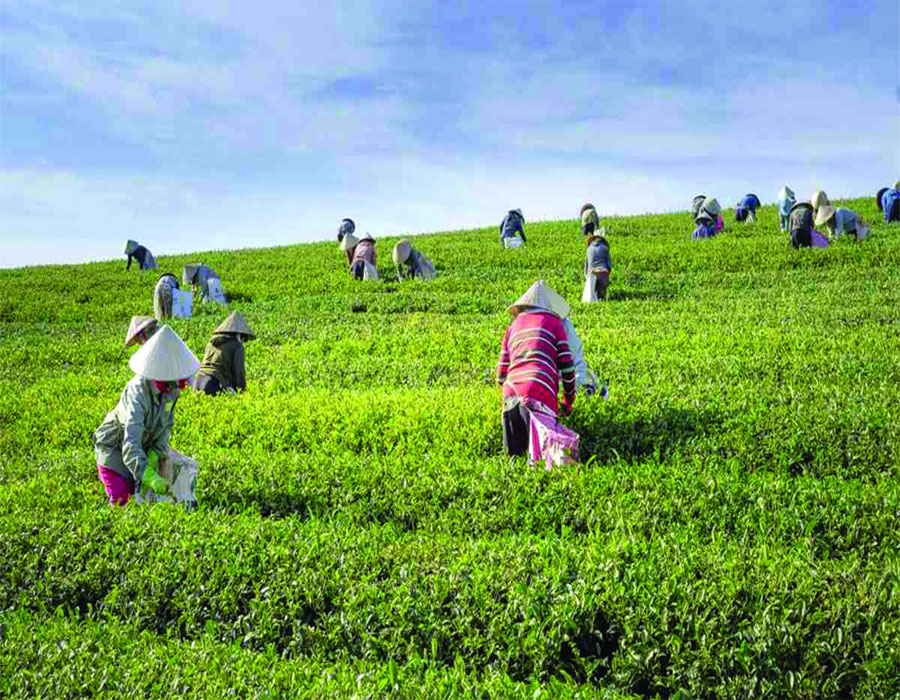 Role of cooperatives in Indian economy