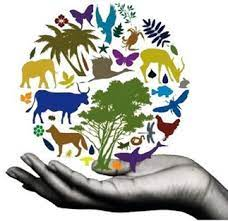 Tackle biodiversity, climate crises together: Experts